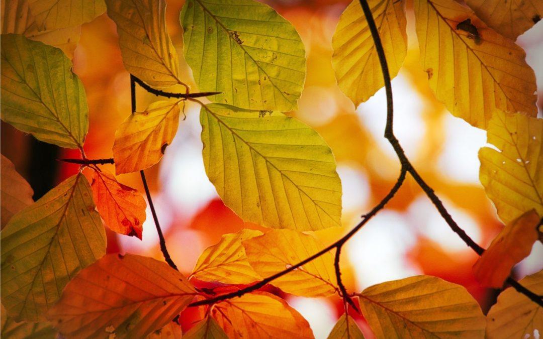 Autumn, a Beautiful Season of Life